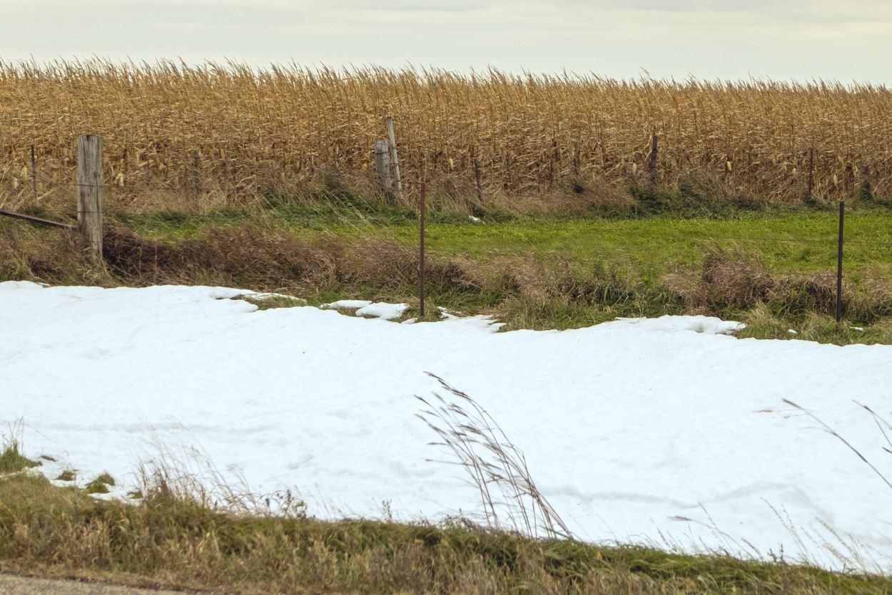 Snowdrift and cornfield in October